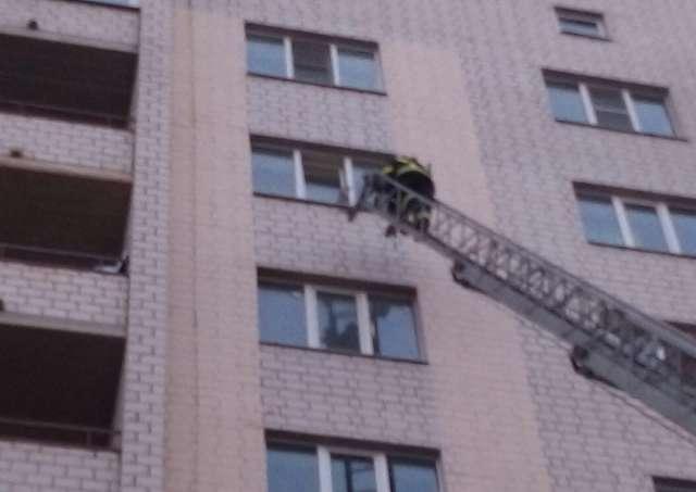 В Великом Новгороде спасатели вытащили застрявшего в окне котёнка