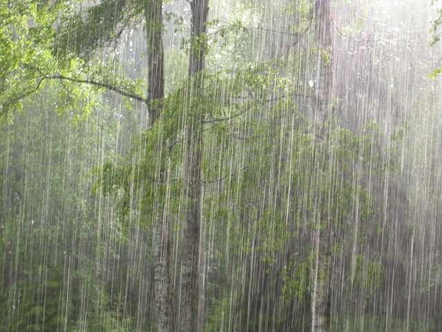 Сырая погода сохранится и 29 июня