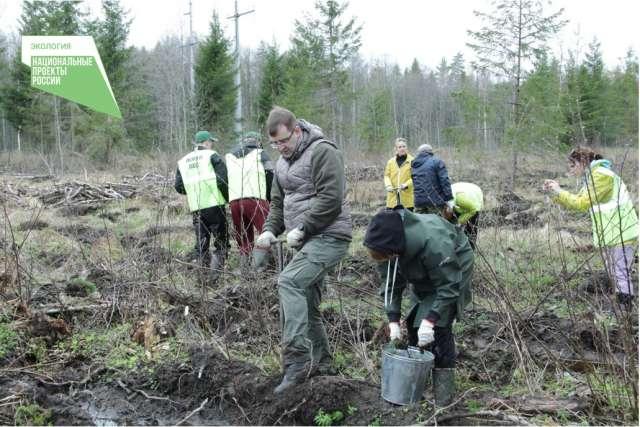 В минприроды Новгородской области подчеркнули, что лесовосстановление остаётся главной задачей специалистов лесной отрасли