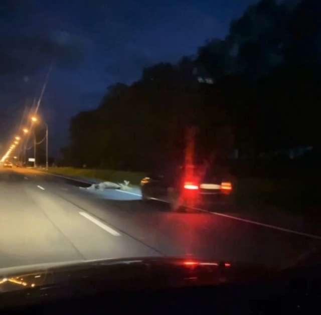 В Новгородском районе автомобиль столкнулся с лосем