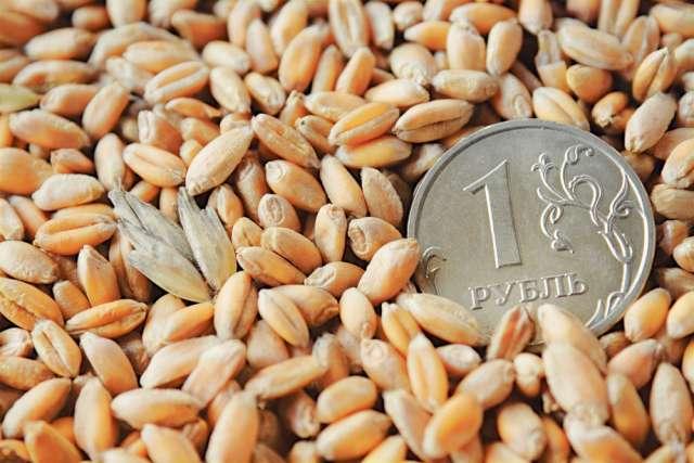 Растениеводы получили 15,5 млн рублей в виде субсидий на приобретение элитных семян