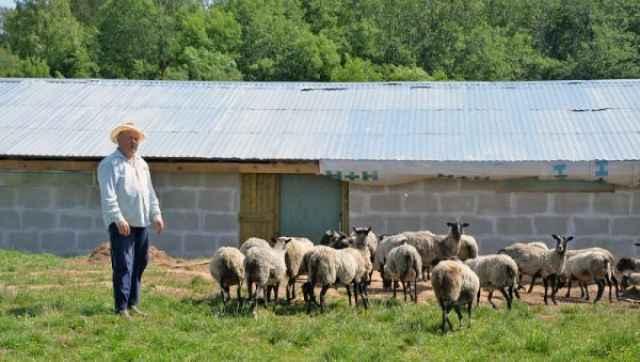 На строительство овчарни Михаил Полушин получил 1,3 млн рублей из областного бюджета и вложил своих ещё порядка 5 млн рублей.