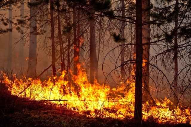 Новгородская область получит 3 миллиона рублей на покупку лесопожарной техники