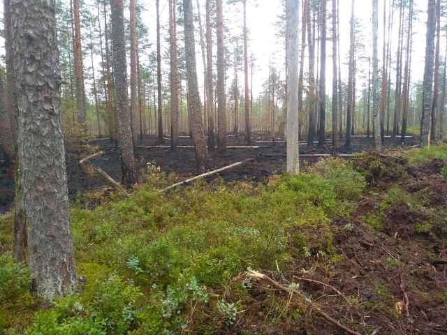 Об очагах пожара жители Новгородской области могут сообщить по телефону 112.