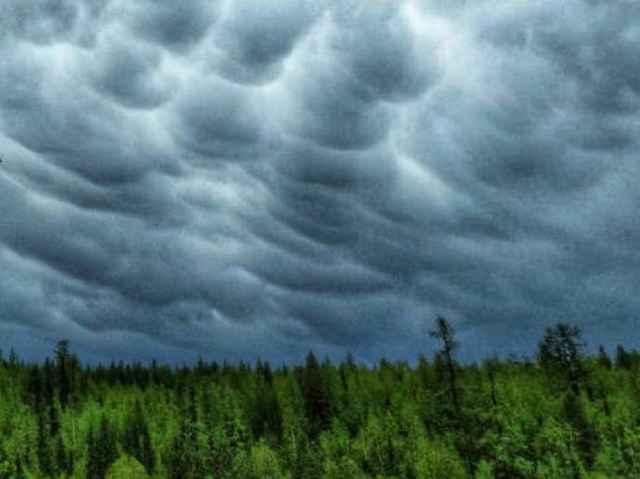 Местами по Новгородской области ожидаются ливневые дожди и грозы.