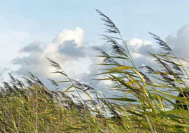 Скорость ветра в Новгородской области, а также на границе Карелии и Ленинградской области может достигать 31 метров в секунду.