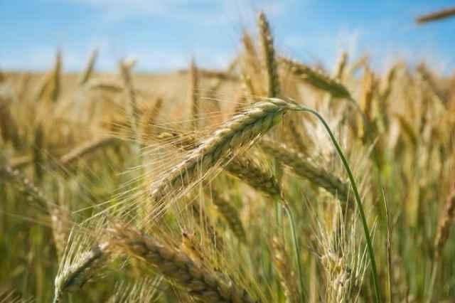 Гранты предназначаются для крестьянских (фермерских) хозяйств, индивидуальных предпринимателей и обычных граждан.