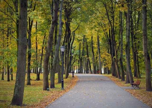 Со временем, возможно, в Кремлёвском парке появится летний кинотеатр.