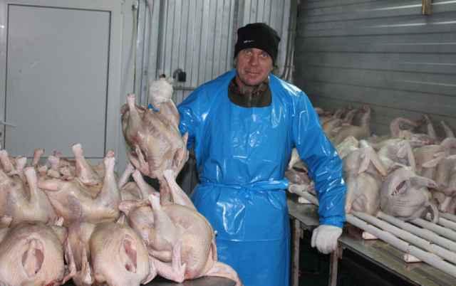 Сотрудник хозяйства Станислав Клименко в цехе  охлаждённого мяса индейки.