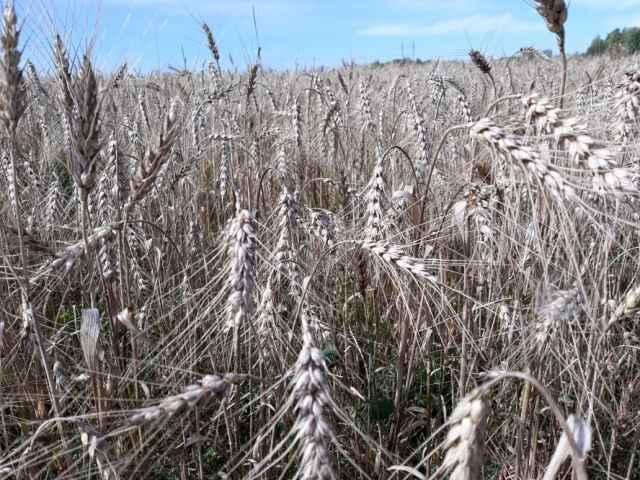 Больше всего субсидий — 37 млн рублей — перечислено новгородским хозяйствам, занимающимся  растениеводством.