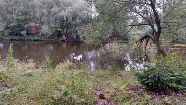 Один из трёх сохранившихся прудов требует очистки дна.