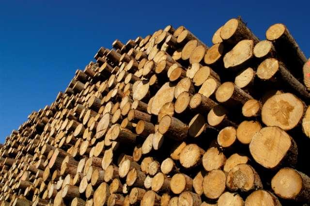 С начала года из Новгородской области экспортировали более 600 тысяч кубометров древесины.