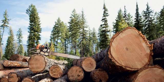 В сентябре неизвестные незаконно вырубили более 155 кубических метров леса в Марёвском районе
