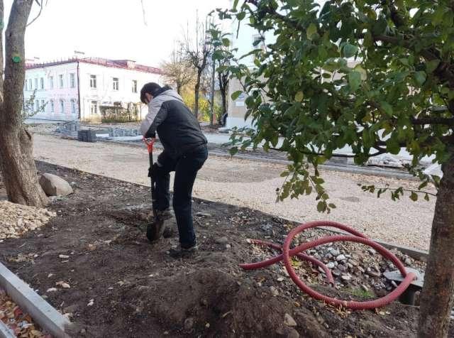 Молодые деревья закрыли бреши в ряду посаженных ранее