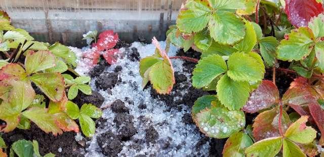 Снежно-ледяные осадки быстро растаяли
