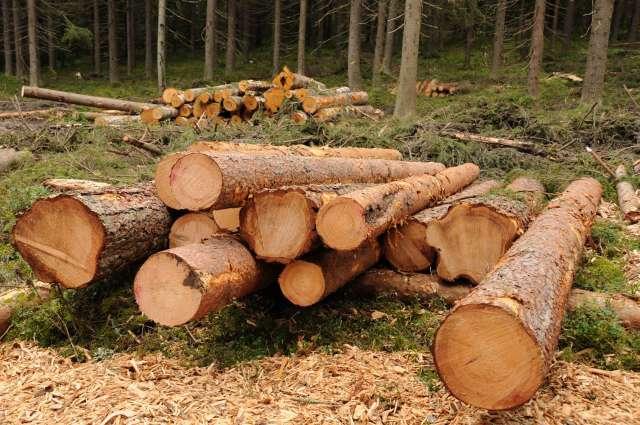 Ситуация находится на личном контроле природоохранного прокурора