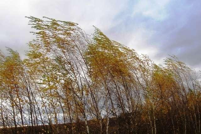 В Новгородскую область придёт сильный южный и юго-западный ветер