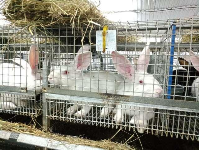 Судебные приставы составили акт описи и ареста 2500 кроликов