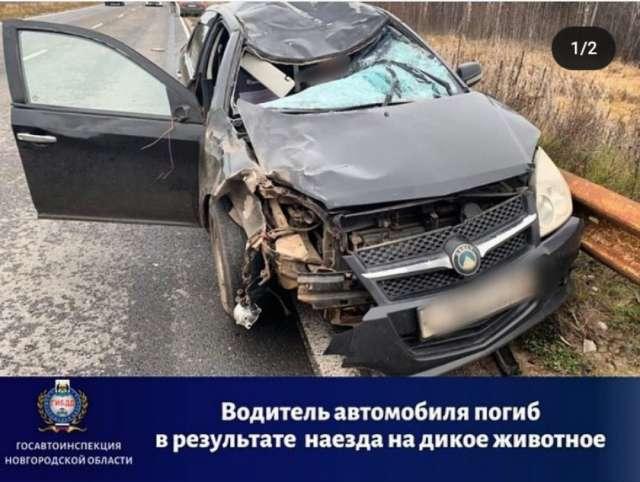 В Боровичском районе автомобиль столкнулся с лосём: погиб водитель